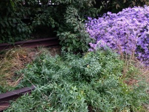 Plants and Rail Tracks