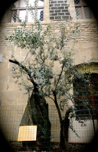 "The ""Olive Tree of Peace"" memorializing the victims of the 27th of May 1993  attack near the Uffizi"