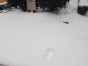 """Bigfoot was here""  Park Avenue"