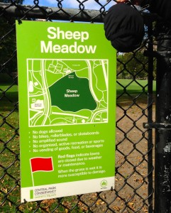 The idea for RestoPresto HIT me at Sheep Meadow in Central Park in 2013! Now it is a reality!